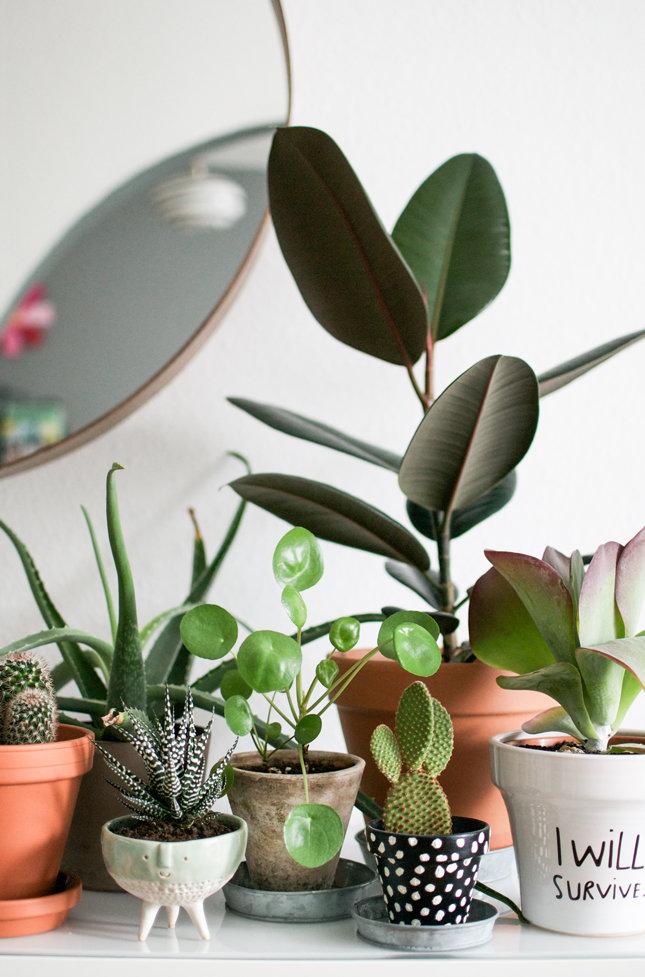 deko mit pflanzen