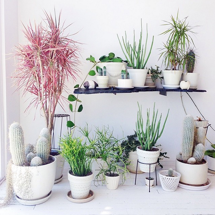 plants-home-decor-8